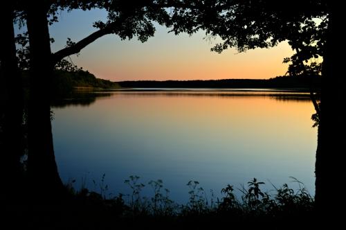 Trees framing sunset on lake